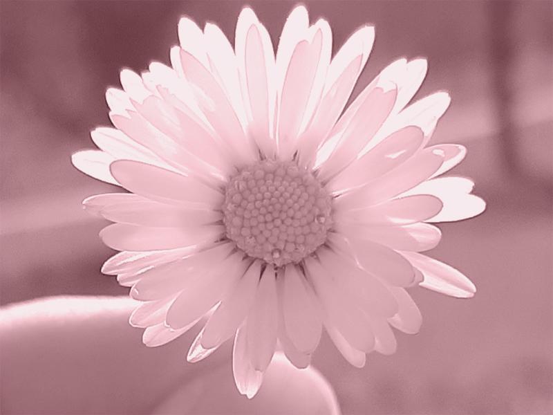 20200317_224428-feller-roze